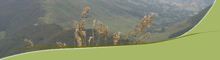 Plantes sur le Puy Mary